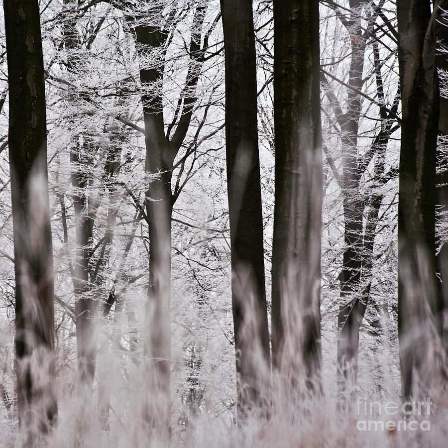 Heiko Photograph - Winter Forest 1 by Heiko Koehrer-Wagner