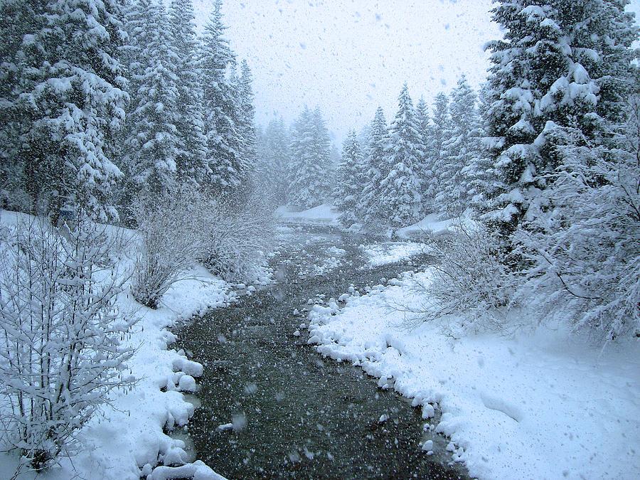 Winter Photograph - Winter Forest by David Rucker