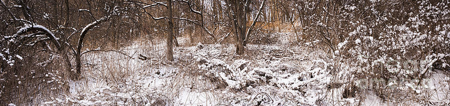 Winter Photograph - Winter Forest Panorama by Elena Elisseeva