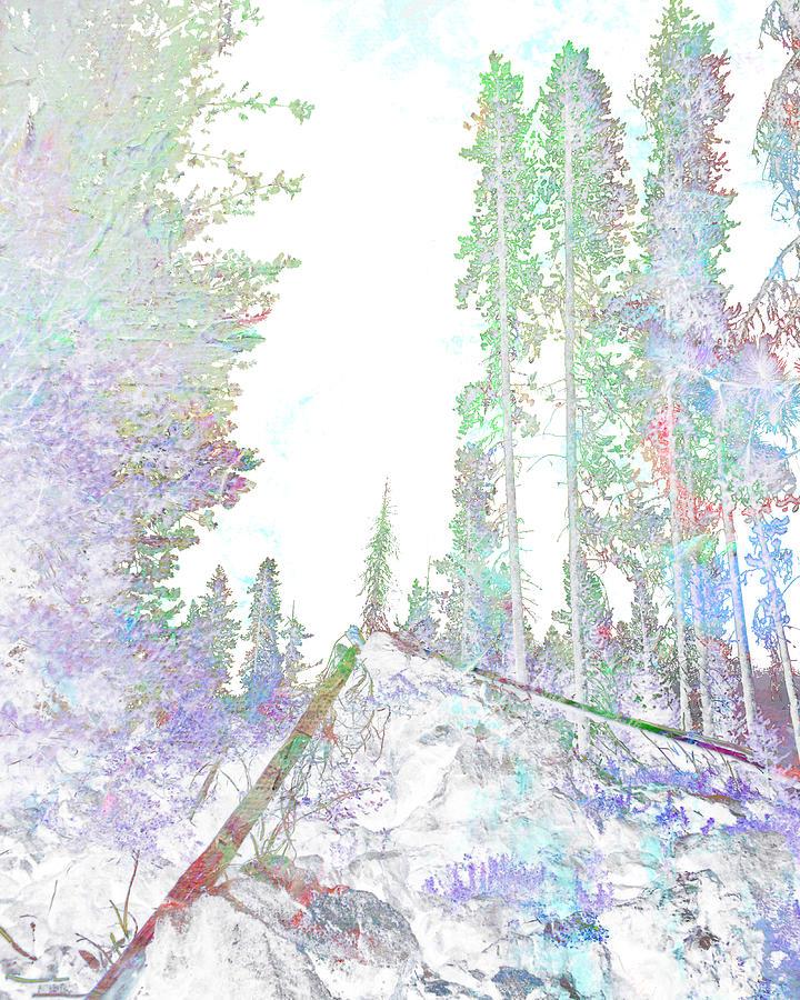 Forest Digital Art - Winter Forest Scene by John Fish