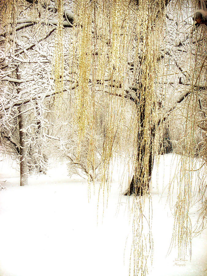 Winter Scene Photograph - Winter Gold by Julie Palencia