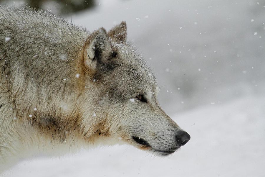 Winter Grey Photograph
