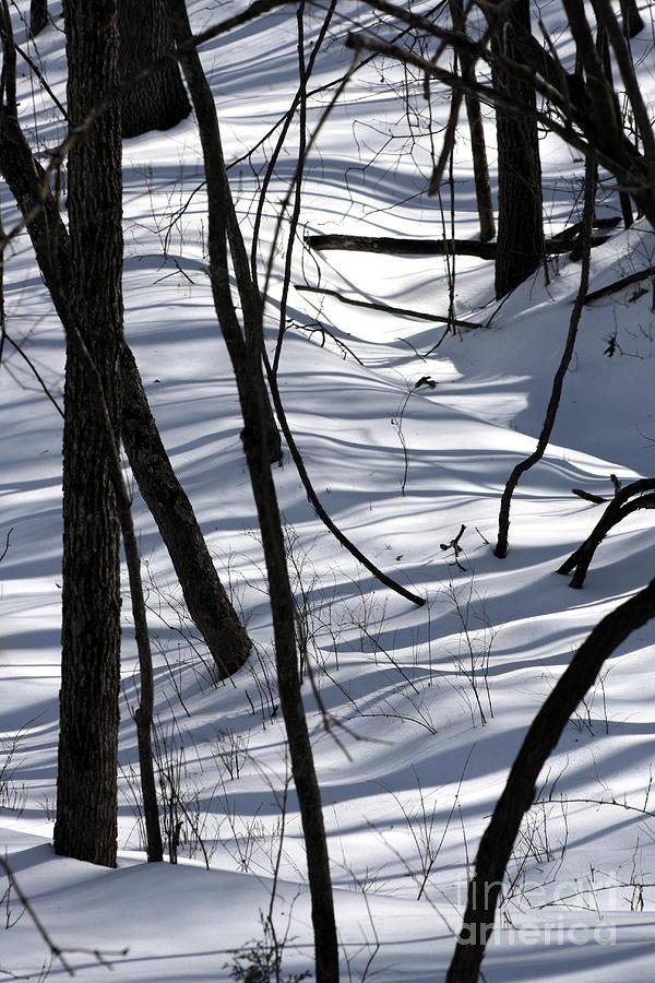 Winter Photograph - Winter Hillside by Fred  Sheridan