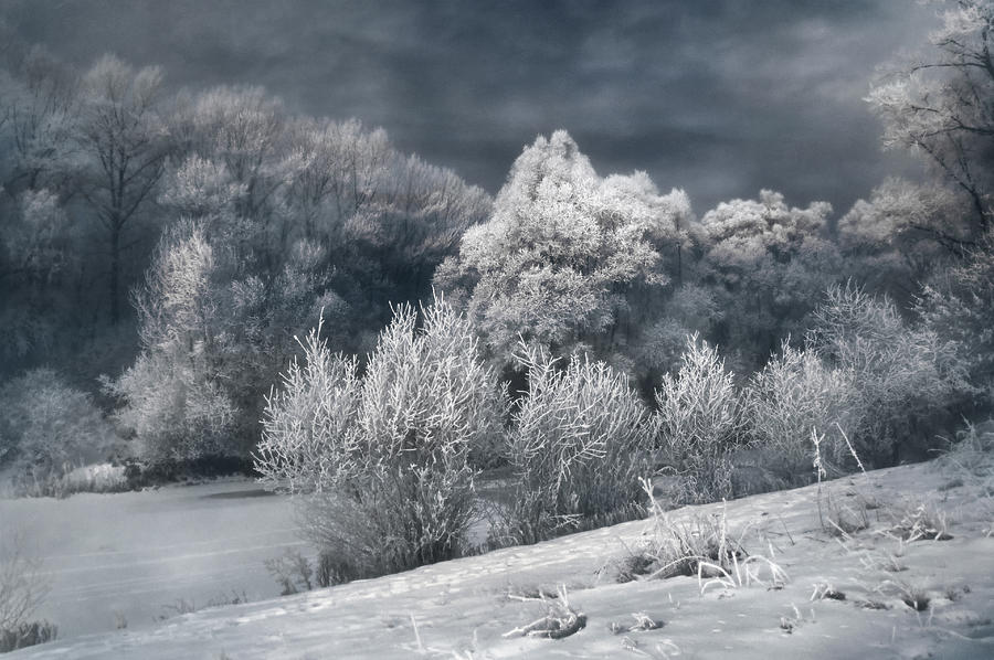 Winter Photograph - Winter - IIi by Akos Kozari