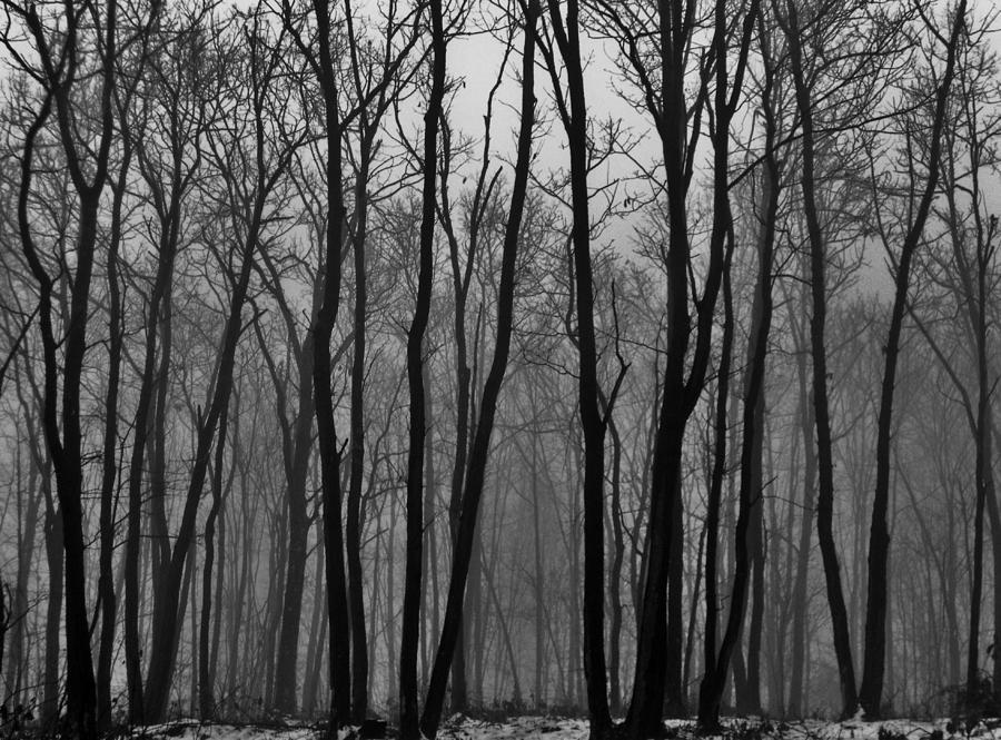 Pennsylvania Photograph - Winter In Pennsylvania by Benjamin Yeager