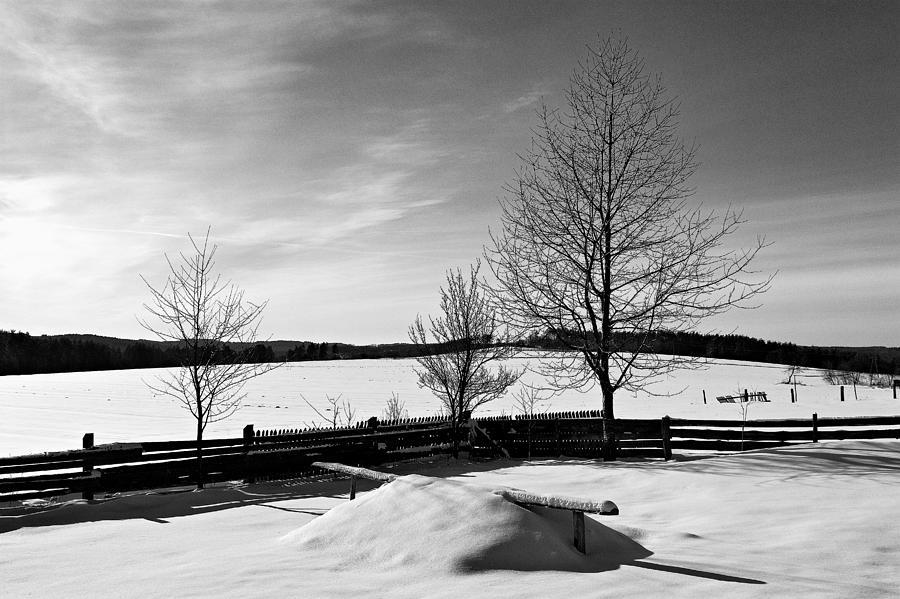 Moczary Photograph - Winter In Roztocze by Tomasz Dziubinski
