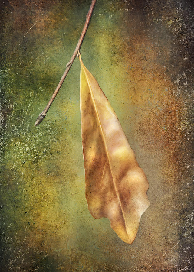 Leaf Photograph - Winter Is Coming by Brenda Bryant
