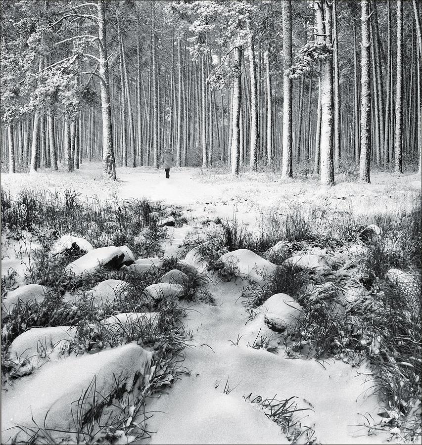Landscape Photograph - Winter Is Here by Vladimir Kholostykh