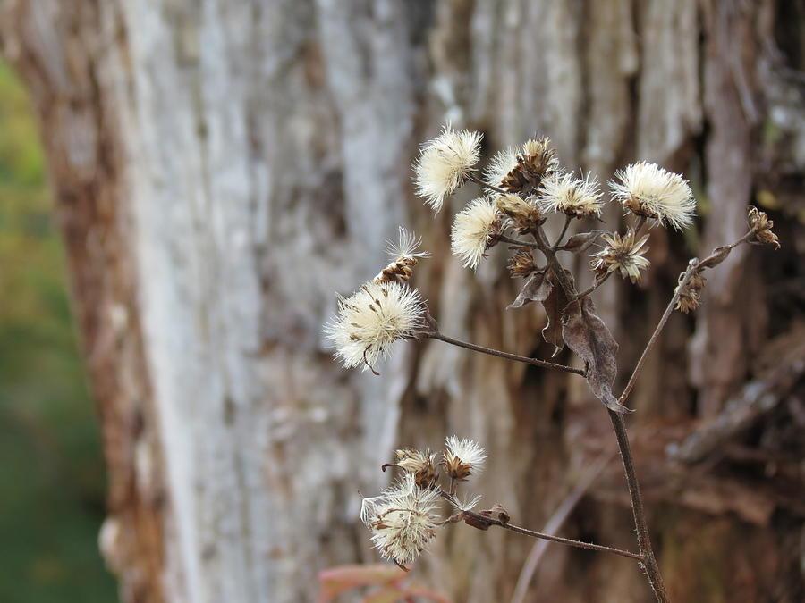 Fall Photograph - Winter Is Near by Rachel Ross