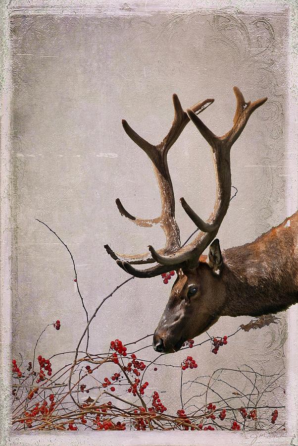 Elk Photograph - Winter King by Julie Magers Soulen