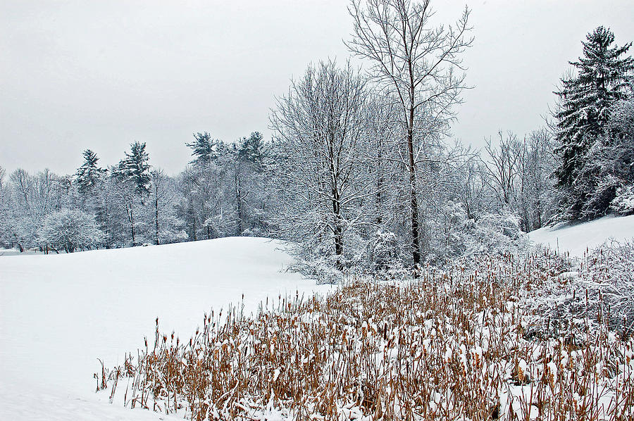 Winter Photograph - Winter Landscape by Aimee L Maher Photography and Art Visit ALMGallerydotcom