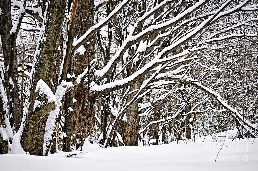 Winter Photograph - Winter Landscape by Elena Elisseeva