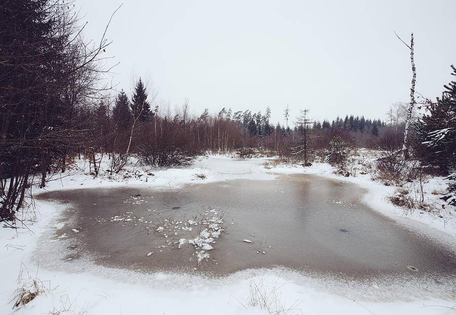 Winter Photograph - Winter Landscape With Trees And Frozen Pond by Matthias Hauser
