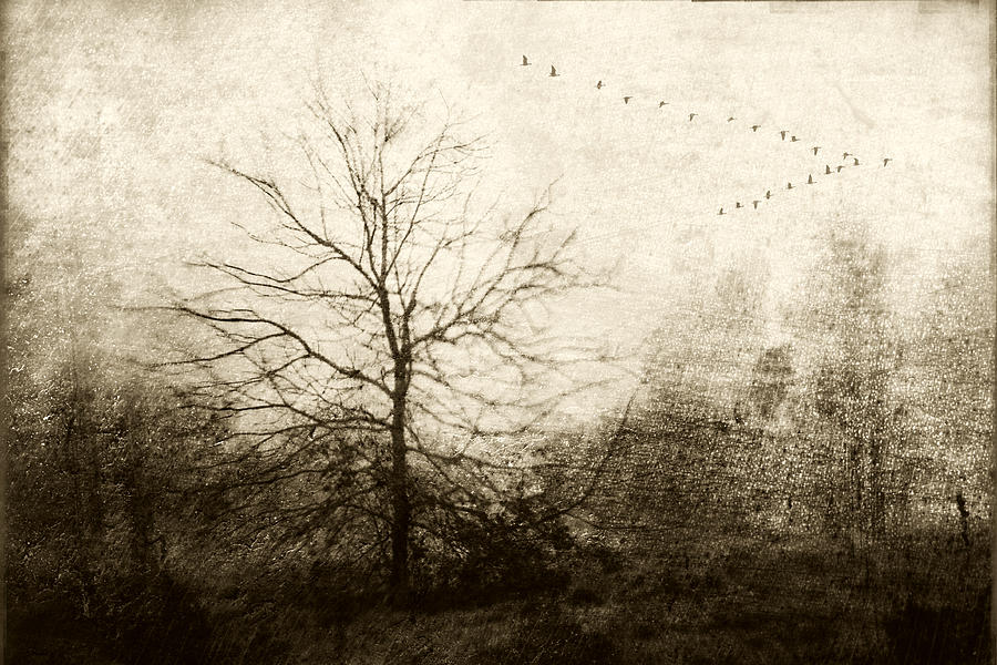 Geese Photograph - Winter Migration by Carol Leigh