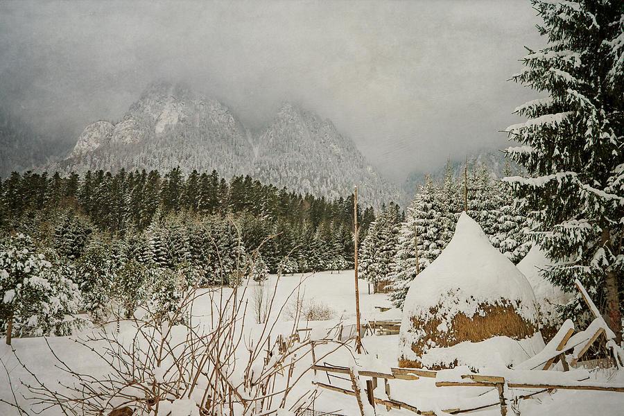 Winter Landscape Photograph - Winter Mood by Cristina-Velina Ion
