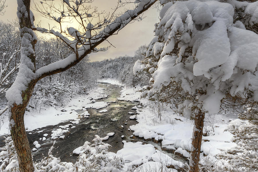 Snow Covered Trees Photograph - Winter Morning by Bill Wakeley