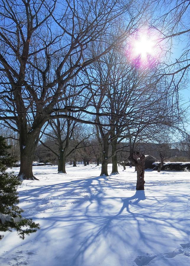 Snow Photograph - Winter Morning Boston Back Bay  by Nina Donner
