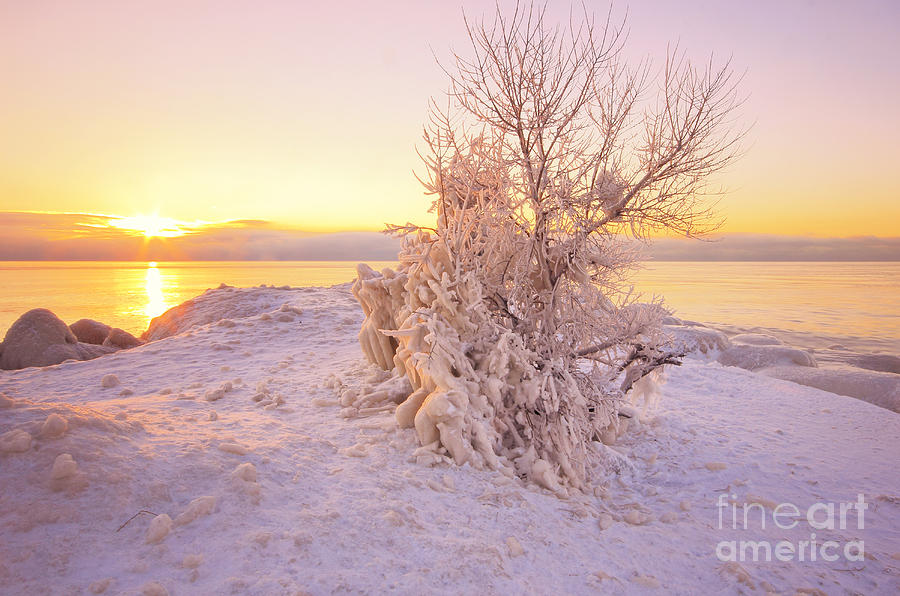 Winter Photograph - Winter Sunrise by Charline Xia