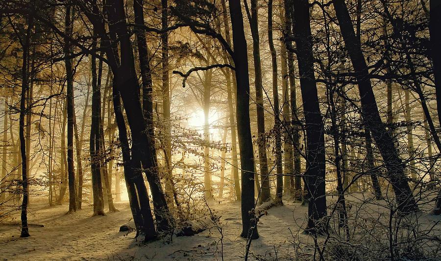 Winter Photograph - Winter Morning by Norbert Maier