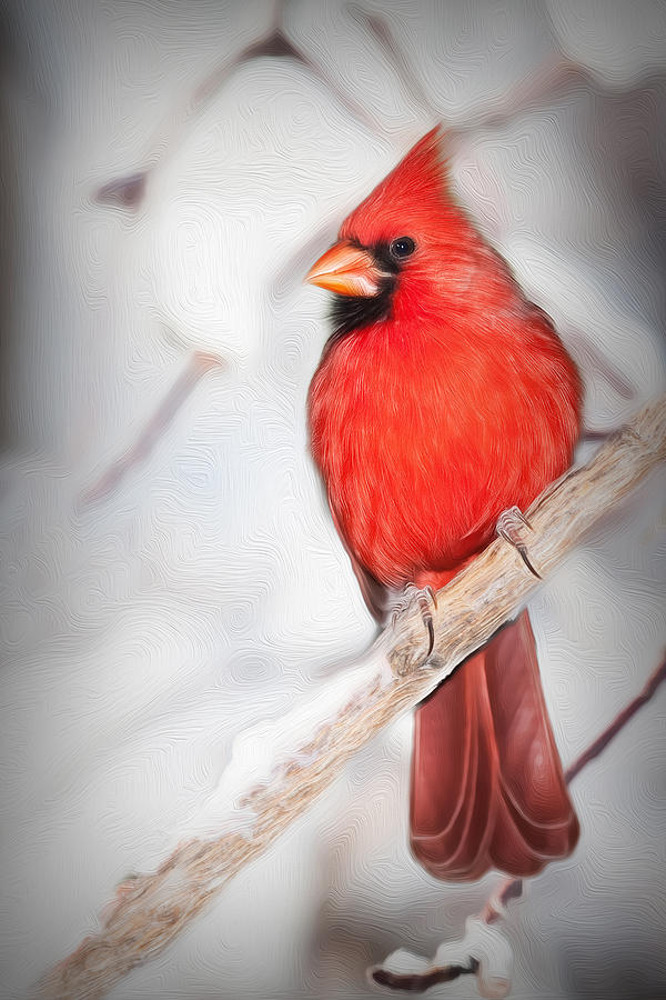 Winter Photograph - Winter Northern Cardinal by Jana Thompson