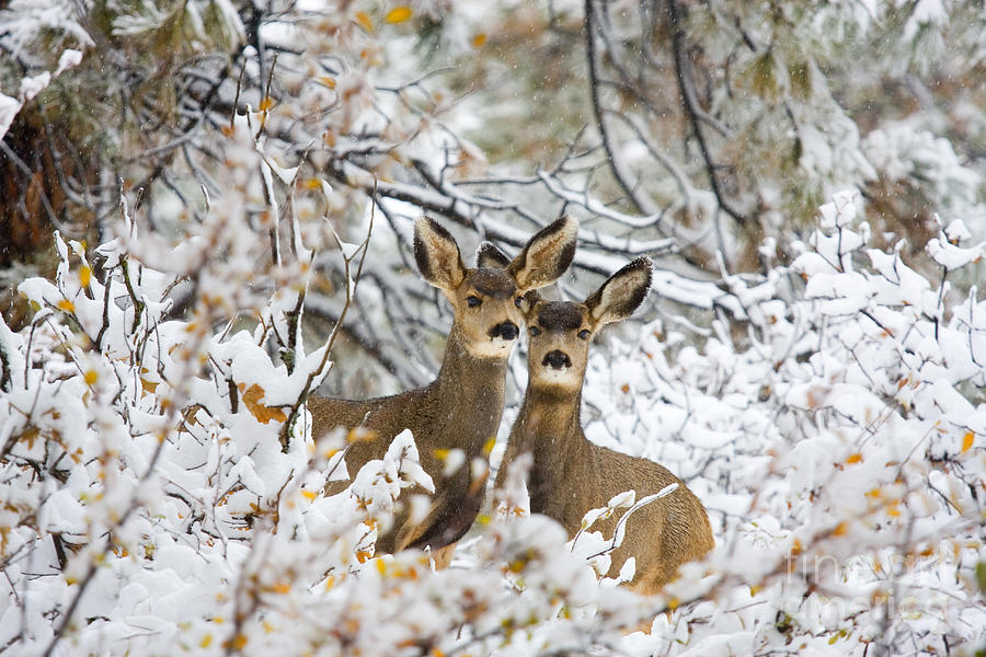 Winter Pair Photograph