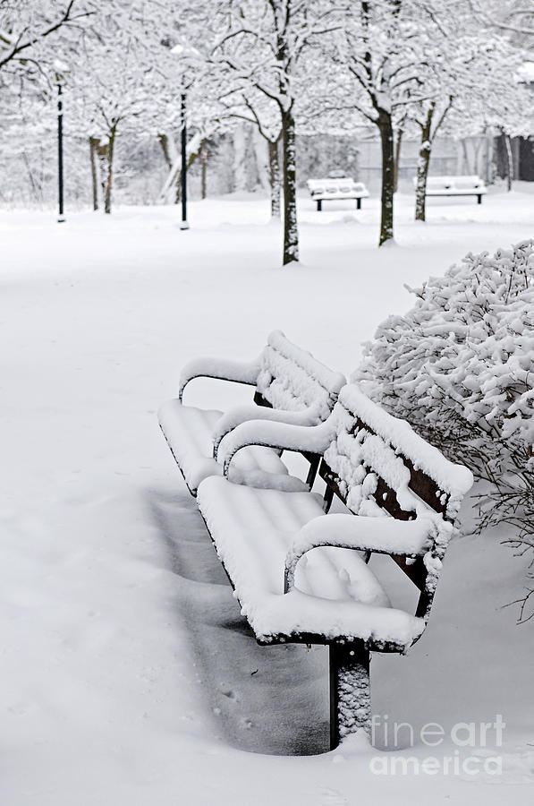 Winter Photograph - Winter Park With Benches by Elena Elisseeva