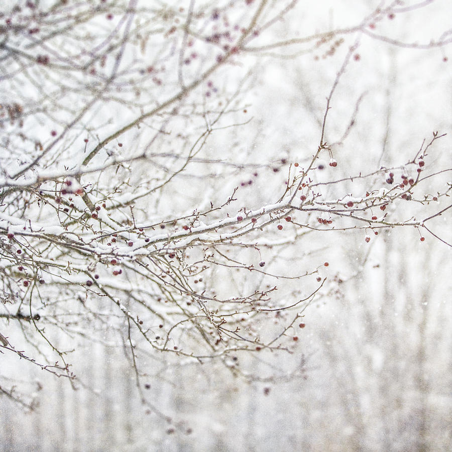 Winter Tree Branches in the Snow Photography Print- #8518 Winter Tree Branches Tree Wall Art Tranquil Winter Scene Nature Photography