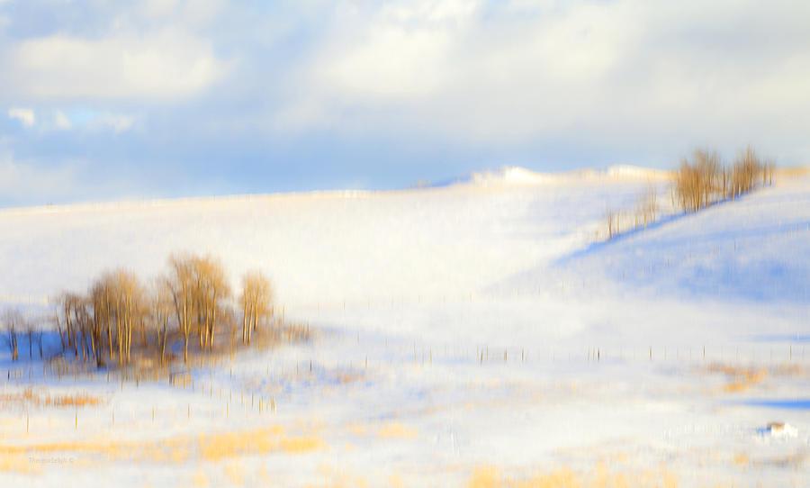 Winter Photograph - Winter Poplars by Theresa Tahara