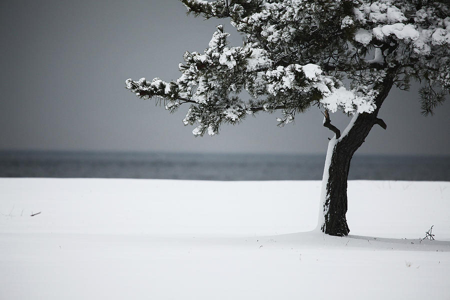 Winter Photograph - Winter Quiet by Karol Livote