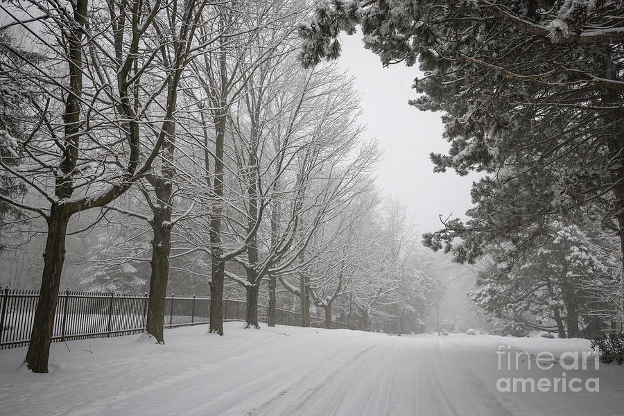 Road Photograph - Winter Road by Elena Elisseeva