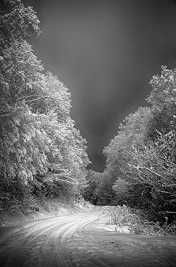 Tree Photograph - Winter Road by John Haldane