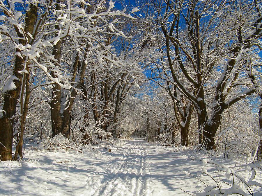 Winter Road Photograph - Winter Road by Raymond Salani III