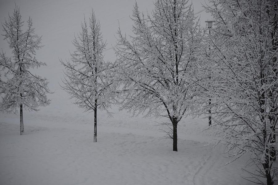 Fine Photograph - Winter Romance 2 by Teo SITCHET-KANDA
