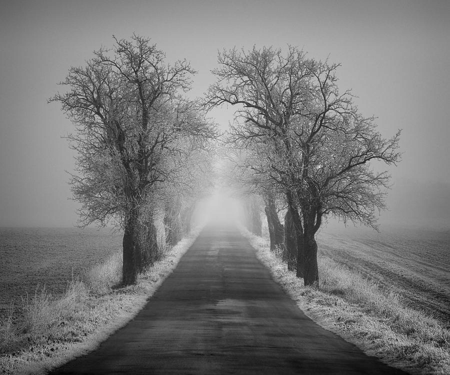 Winter Photograph - Winter Scene by Jaromir Hron