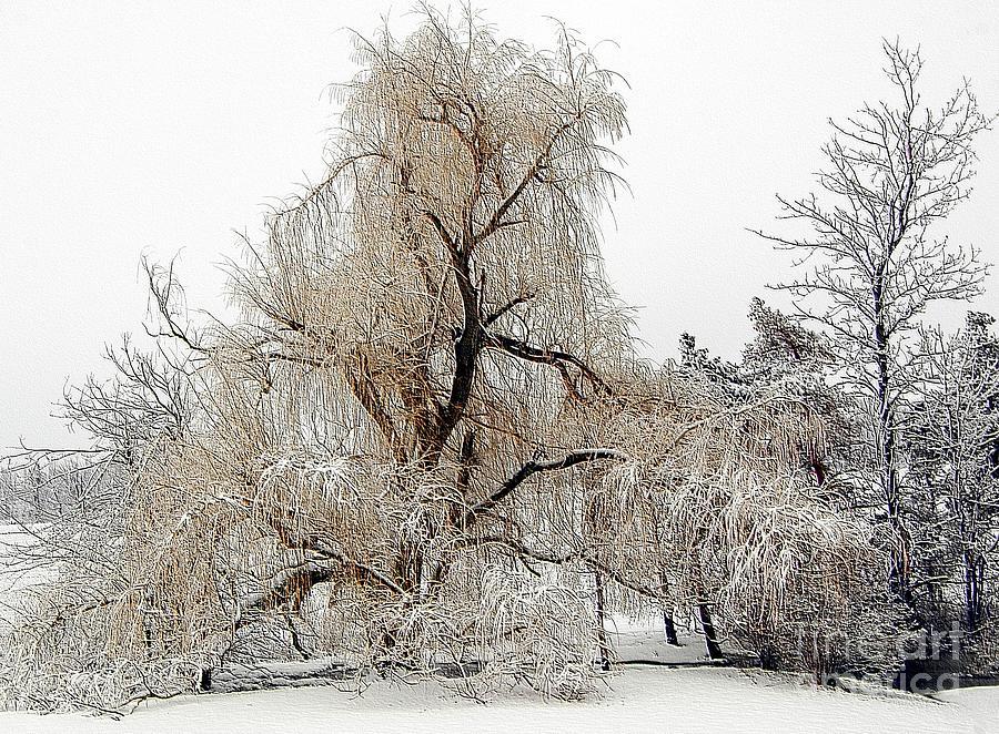 Winter Photograph - Winter Scene by Kathleen Struckle