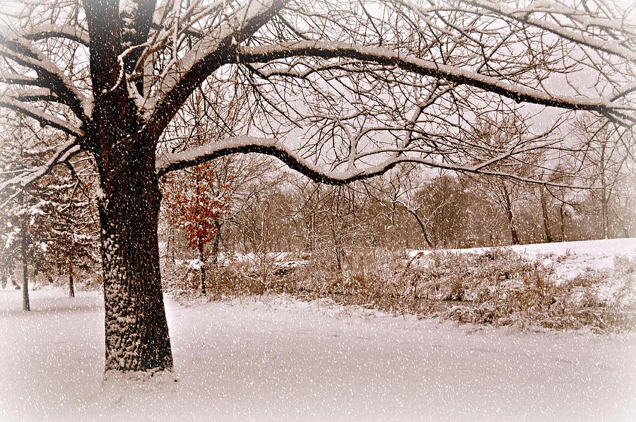 Winter Photograph - Winter Scene by Marty Koch