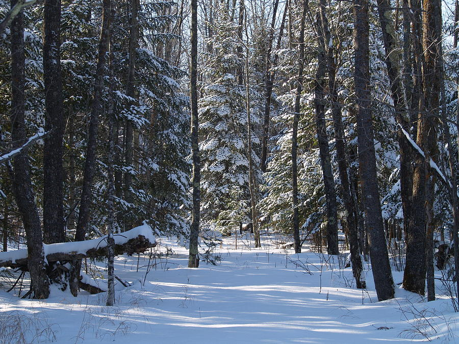 Susan Photograph - Winter Scene1 by Susan Crossman Buscho