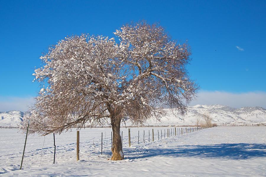 Winter Season On The Range Snow And Blue Sky Photograph