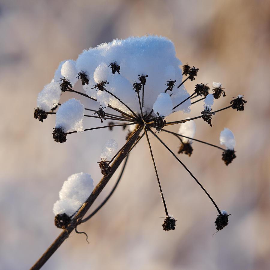 Winter Seeds Photograph