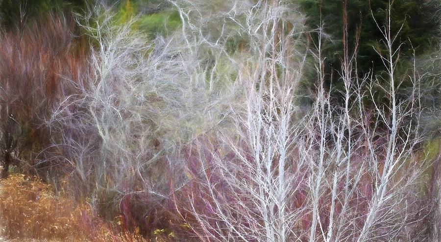 California Native Plants Photograph - Winter Shrub Border with Alder by Saxon Holt