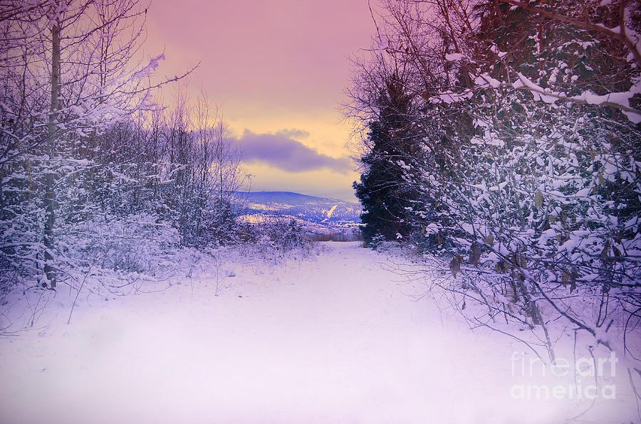 Winter Photograph - Winter Skies by Tara Turner