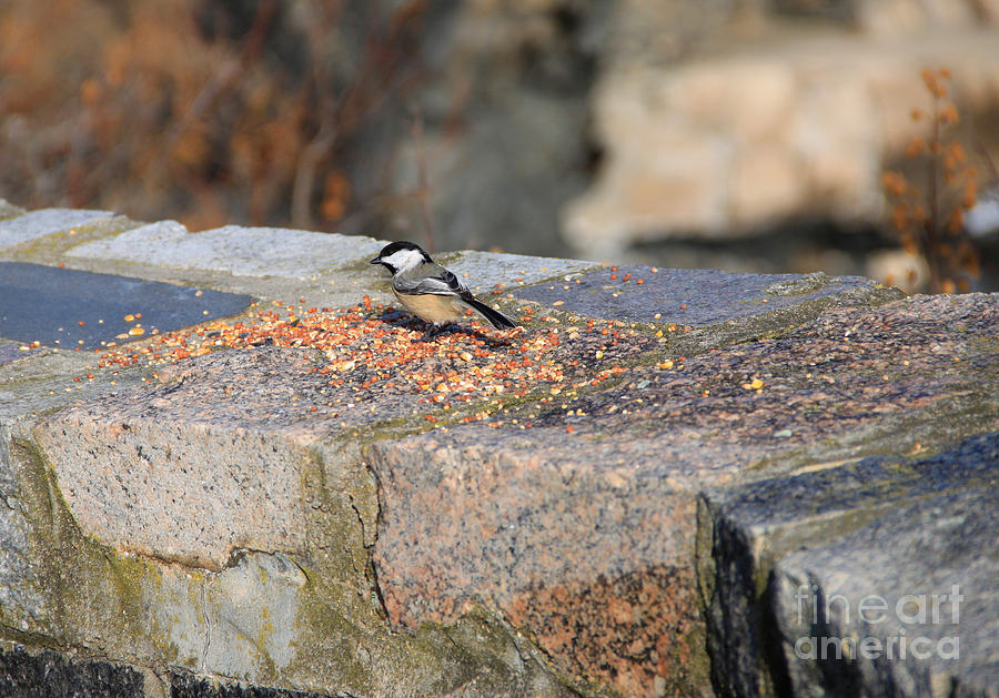 Bird Seed Photograph - Winter Snack by Michael Mooney