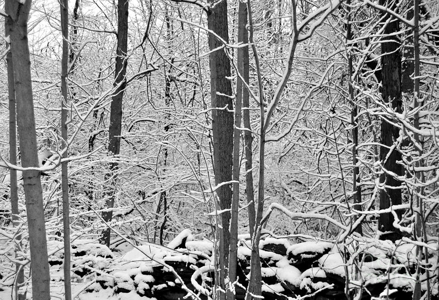Winter Snow Scene in the Woods by Staci Bigelow