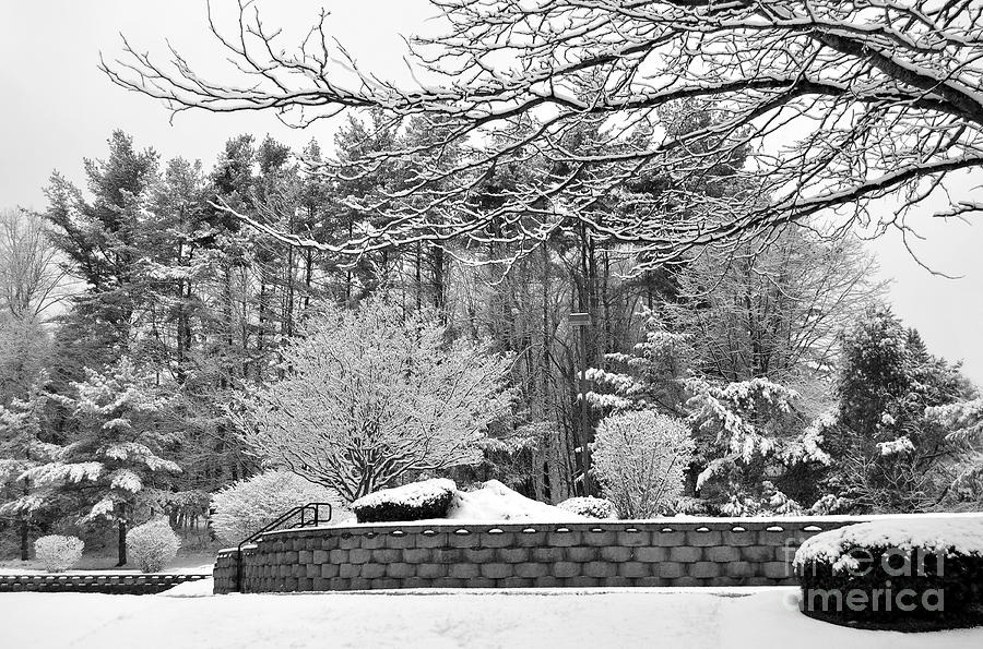 Winter Snow Scene by Staci Bigelow