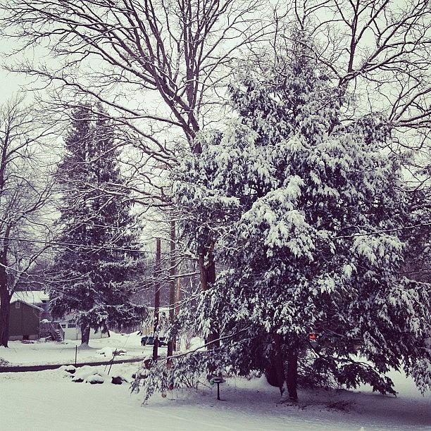 Yay Photograph - #winter #snow #yay #pinetree #pine by Amber Campanaro