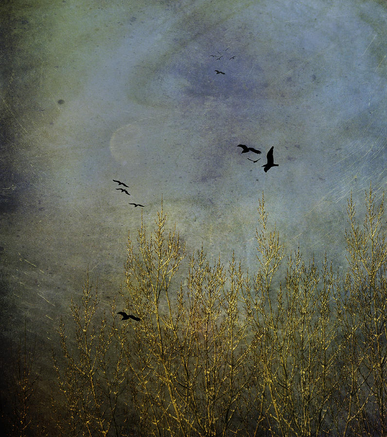 Winter Photograph - Winter Song by Diane Schuster