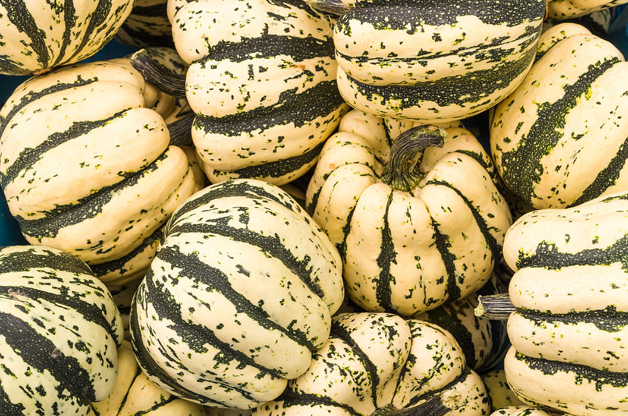 Agriculture Photograph - Winter Squash by John Trax