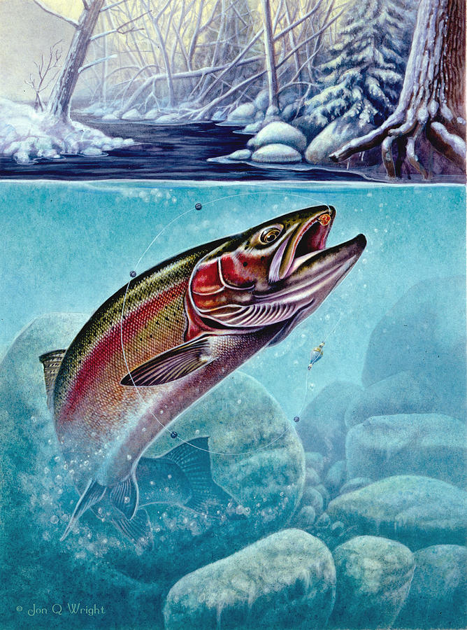 Jon Q Wright Painting - Winter Steelhead by Jon Q Wright