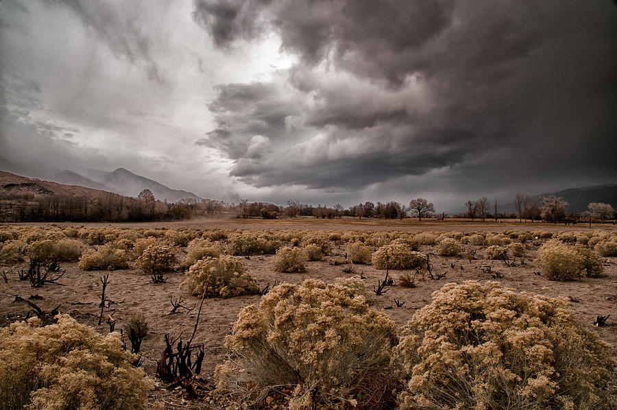 Storm Photograph - Winter Storm by Cat Connor