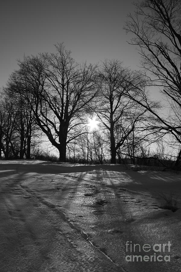 Winter Sunset Photograph - Winter Sun  by Simon Jones